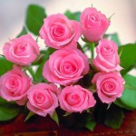 dalat-flower1